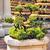 bonsai · imagen · agradable · pequeño · árbol · jardín - foto stock © petrmalyshev