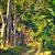 camino · de · tierra · tropicales · forestales · sol · brillante · paisaje - foto stock © petrmalyshev