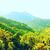 beautiful tropic landscape stock photo © petrmalyshev
