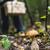 キノコ · 森林 · 浅い · フィールド · バスケット · ツリー - ストックフォト © Phantom1311