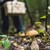 гриб · лес · мелкий · области · корзины · дерево - Сток-фото © Phantom1311