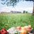 almák · virágok · zöld · fű · kék · ég · étel · fű - stock fotó © Phantom1311
