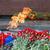 цветы · пламени · гвоздика · огня · мелкий · Мир - Сток-фото © Phantom1311