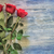 Roses on a wooden board stock photo © Phantom1311