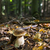 菌 · 森林 · 緑 · 色 · 新鮮な · 森 - ストックフォト © phbcz