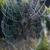spinnenweb · dauw · zwarte · bouw · web - stockfoto © phbcz