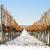 inverno · vinha · República · Checa · natureza · neve - foto stock © phbcz
