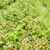 framboise · alimentaire · agriculture · saine · naturelles - photo stock © phbcz