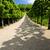 villandry castles garden indre et loire centre france stock photo © phbcz
