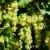 imaturo · França · verde · vermelho · feminino - foto stock © phbcz