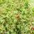 framboise · alimentaire · usine · saine · naturelles - photo stock © phbcz