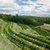 vineyards czech republic stock photo © phbcz