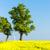 フィールド · ツリー · 花 · 雲 · 風景 - ストックフォト © phbcz