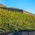 vallée · alpes · Suisse · ciel · nuages · forêt - photo stock © phbcz