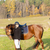 lovas · ló · legelő · nők · fiatal · áll - stock fotó © phbcz