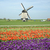 moulin · à · vent · tulipe · domaine · Pays-Bas · printemps · rouge - photo stock © phbcz