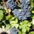 vinha · azul · uvas · região · França - foto stock © phbcz