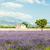 plato · Fransa · manzara · bitki · Avrupa - stok fotoğraf © phbcz