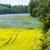 panorama · campi · Repubblica · Ceca · albero · foresta - foto d'archivio © phbcz