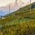 регион · Швейцария · пейзаж · путешествия · гор · завода - Сток-фото © phbcz