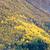 landscape near borgund stavkirke norway stock photo © phbcz