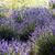 França · flor · natureza · vermelho · planta - foto stock © phbcz