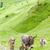 donkeys landscape of piedmont near french borders italy stock photo © phbcz