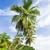 La Sagesse Bay, Grenada stock photo © phbcz