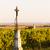view of vineyard near unterretzbach lower austria austria stock photo © phbcz