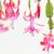 サボテン · 花 · 自然 · 庭園 · 葉 - ストックフォト © phbcz