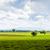 ラベンダー畑 · 高原 · フランス · 春 · 風景 · 旅行 - ストックフォト © phbcz