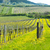 spring vineyards southern moravia czech republic stock photo © phbcz
