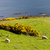 landscape with sheep near crackaig highlands scotland stock photo © phbcz