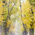 sonbahar · geçit · ağaç · sonbahar · bitki · yol - stok fotoğraf © phbcz
