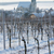 hnanice with winter vineyard czech republic stock photo © phbcz