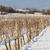 зима · виноградник · южный · Чешская · республика · природы · снега - Сток-фото © phbcz