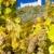 ruins of Devicky castle with vineyard, Czech Republic stock photo © phbcz