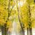 路地 · ツリー · 秋 · 工場 · パス - ストックフォト © phbcz
