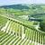 Italië · natuur · land · wijnstok · natuurlijke · buitenshuis - stockfoto © phbcz