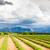 campo · de · lavanda · planalto · França · natureza · planta · europa - foto stock © phbcz