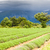 primavera · campo · de · lavanda · planalto · França · paisagem · viajar - foto stock © phbcz
