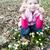 スノーフレーク · 春の花 · クローズアップ · マクロ · ショット · 花 - ストックフォト © phbcz