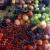 Rood · zwarte · frambozen · natuur · vruchten · groene - stockfoto © phbcz