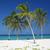 la · strand · Cuba · zee · zomer · palm - stockfoto © phbcz