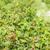 framboise · alimentaire · fruits · domaine · saine - photo stock © phbcz