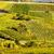 виноградник · снизить · Австрия · лист · области · зеленый - Сток-фото © phbcz