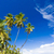 albero · panorama · mare · estate · Palm · Ocean - foto d'archivio © phbcz