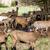 nyáj · kecskék · Franciaország · Európa · vidék · mezőgazdaság - stock fotó © phbcz