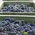 wine harvest southern moravia czech republic stock photo © phbcz