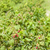 framboise · alimentaire · domaine · saine · naturelles - photo stock © phbcz